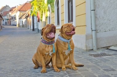 Funny dogs on the street