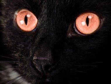 Beautiful cat face close up