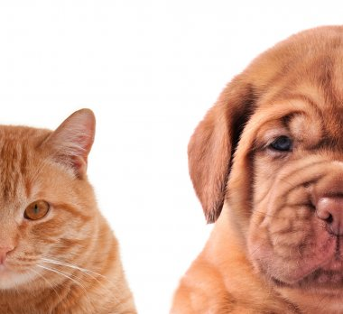Cat and Dog - half of muzzle close up portraits isolated