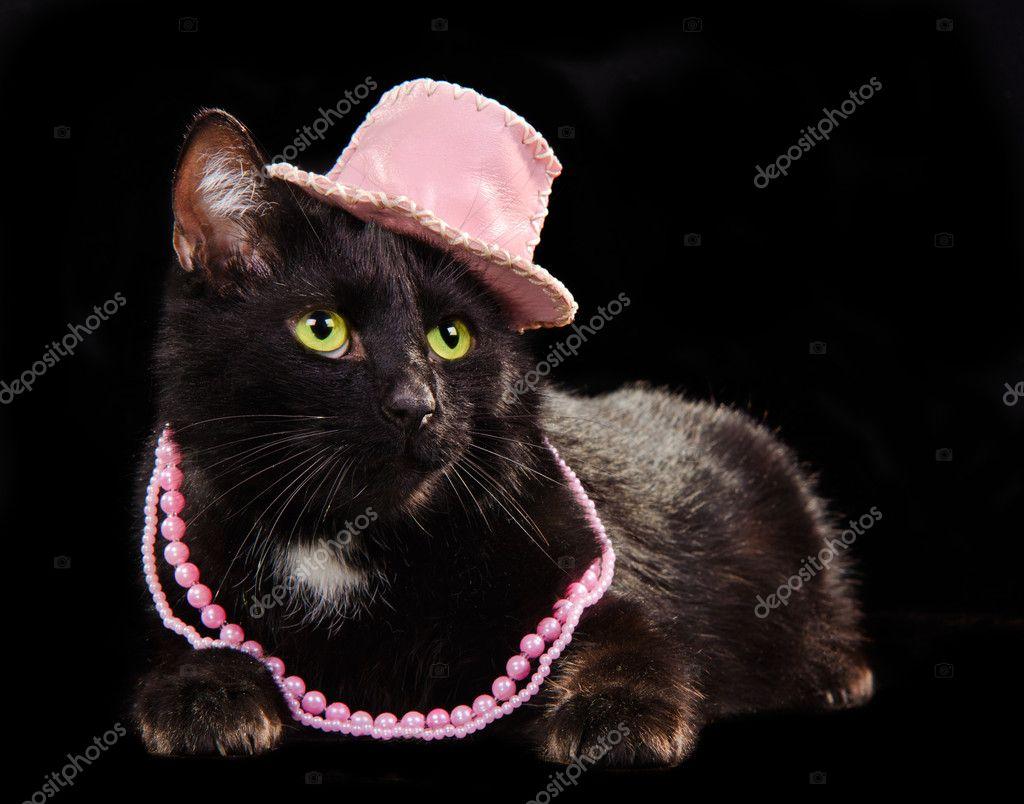 кошек черных картинки гламурных