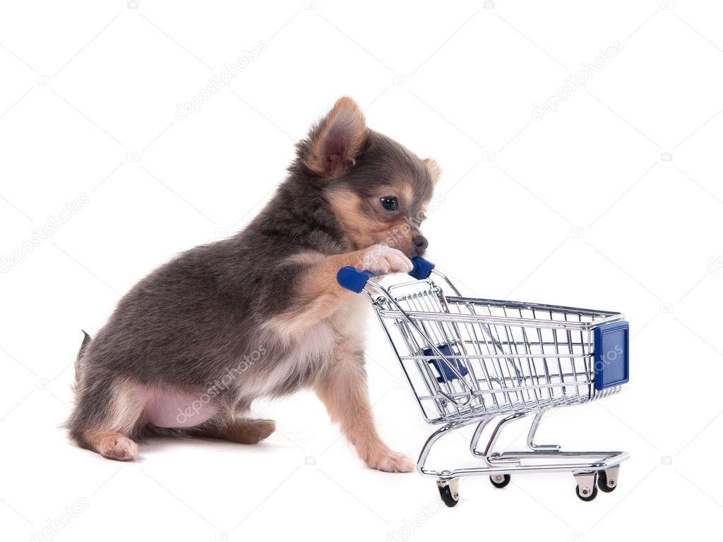 446a7c8ad13 Čivava štěně a nákupního košíku — Stock Fotografie © vitalytitov ...