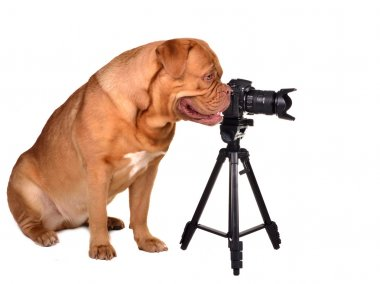 Photographer with photo camera