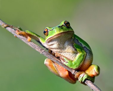 """Картина, постер, плакат, фотообои """"лягушка находится в естественной среде обитания постеры"""", артикул 10594136"""