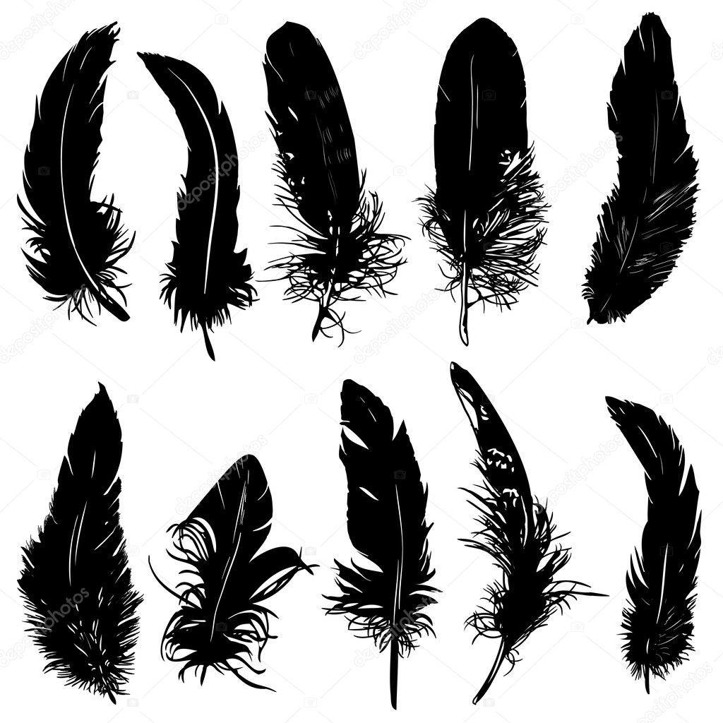 Feathers silhouette.
