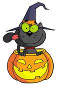 Photo Halloween Cat