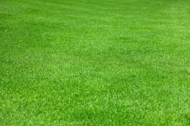 Evenly green grass