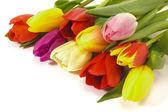 parta tulipány