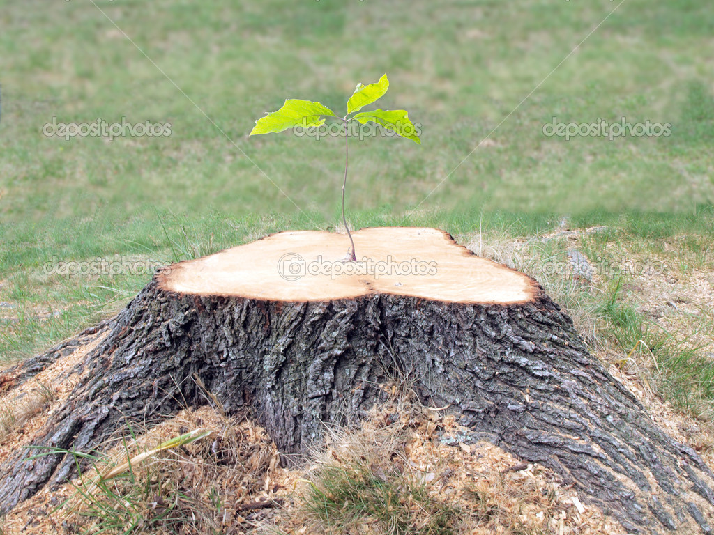 Defiant tree stump