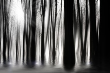 Spooky woods in BW with flooding