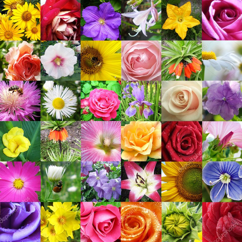 Collage from different beautiful flowers