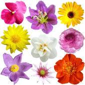Fényképek sor a különböző formájú, színű virágok