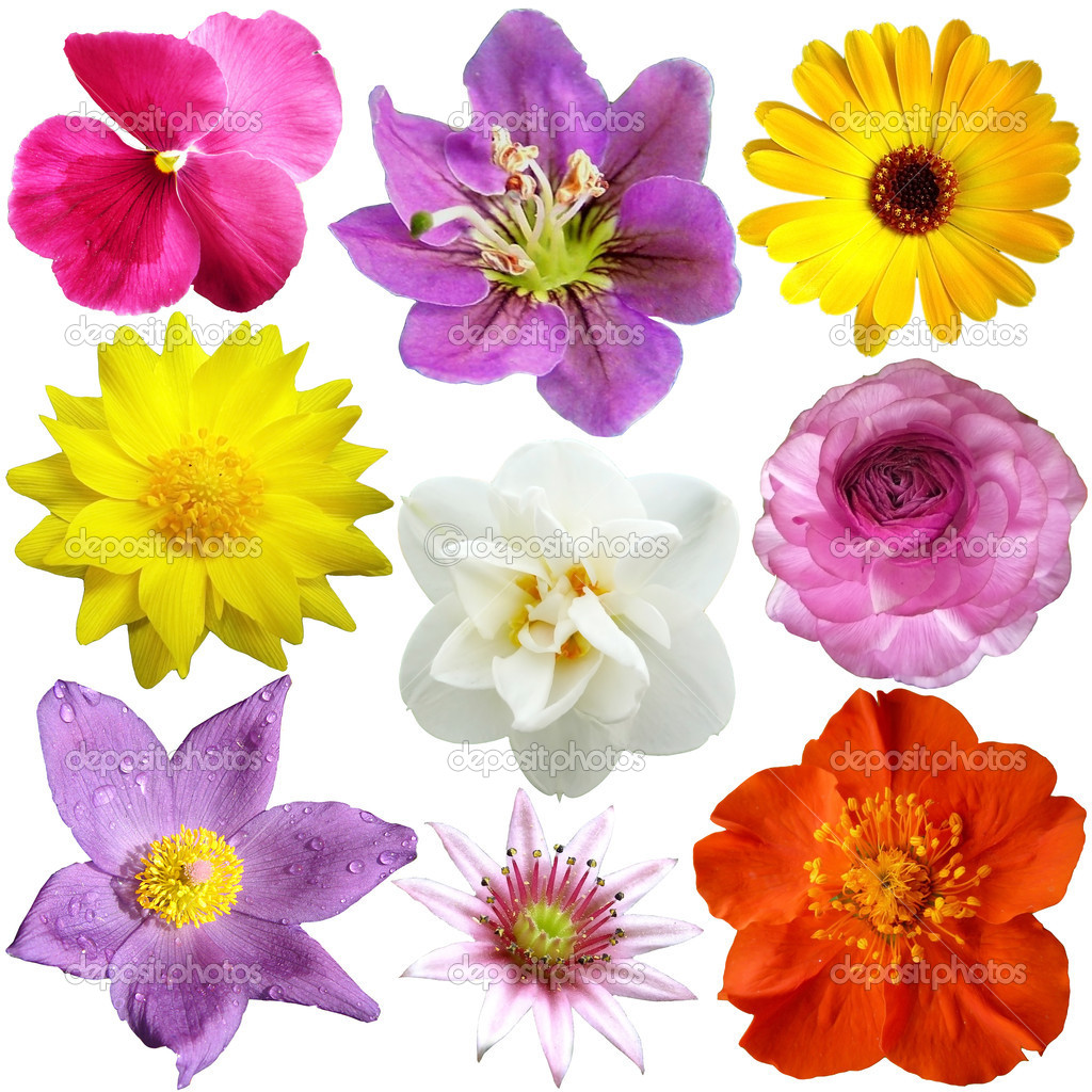 of flowers in different shapes, color — Stock Photo #8968897