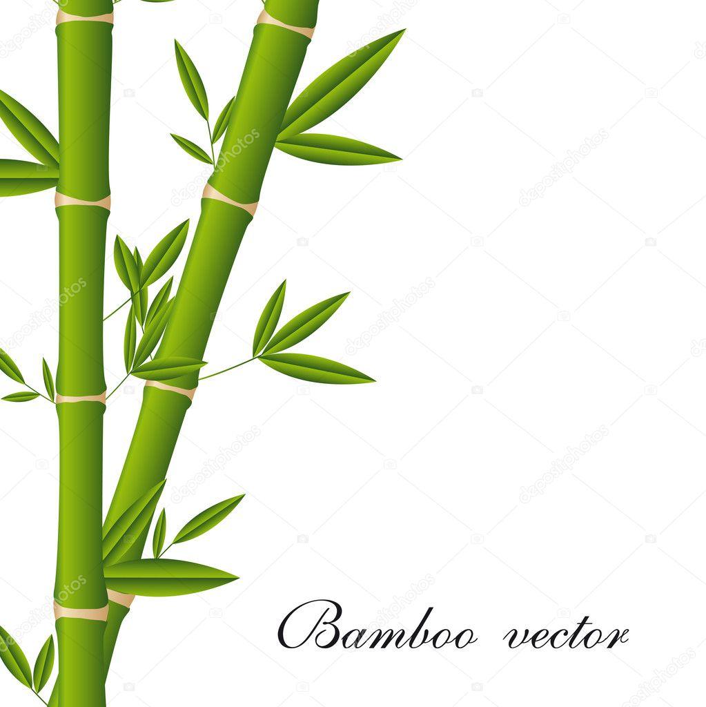 bamboo stock vector yupiramos 10362829 rh depositphotos com bamboo vector free download bamboo vector background