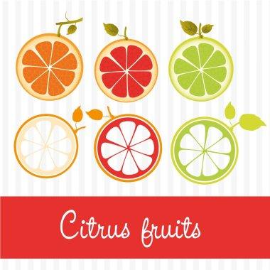 citrus fruits vector
