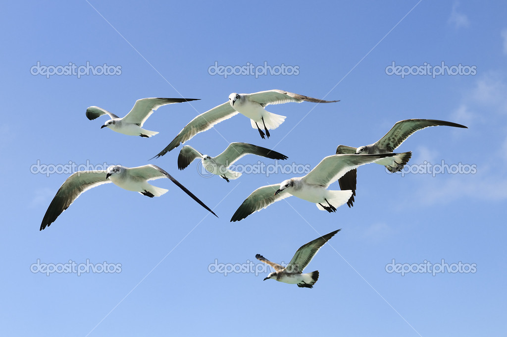Group of seagull