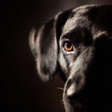 Black dog stock vector