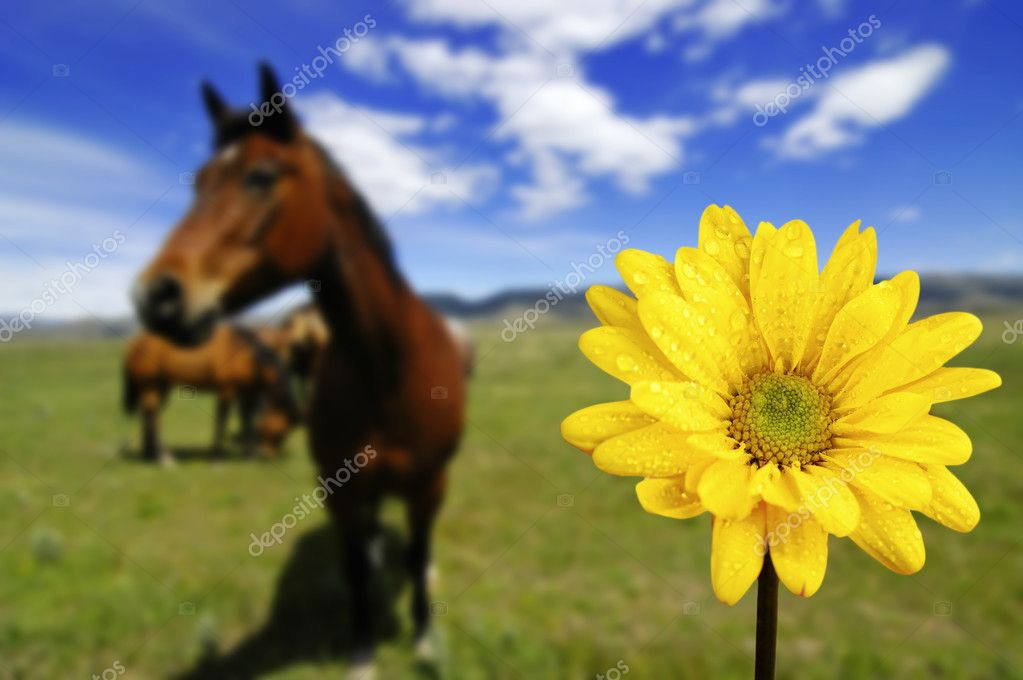Horses in Field with Yellow Spring Flower