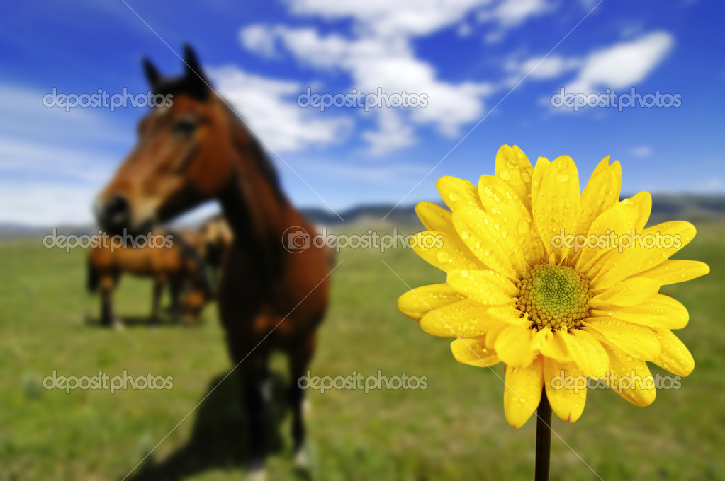 Horses In Field With Yellow Spring Flower Stock Photo Eric1513