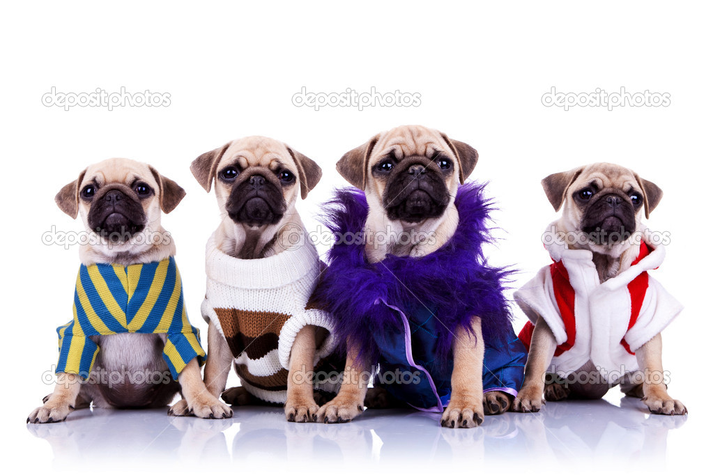 Four dressed mops puppy dogs