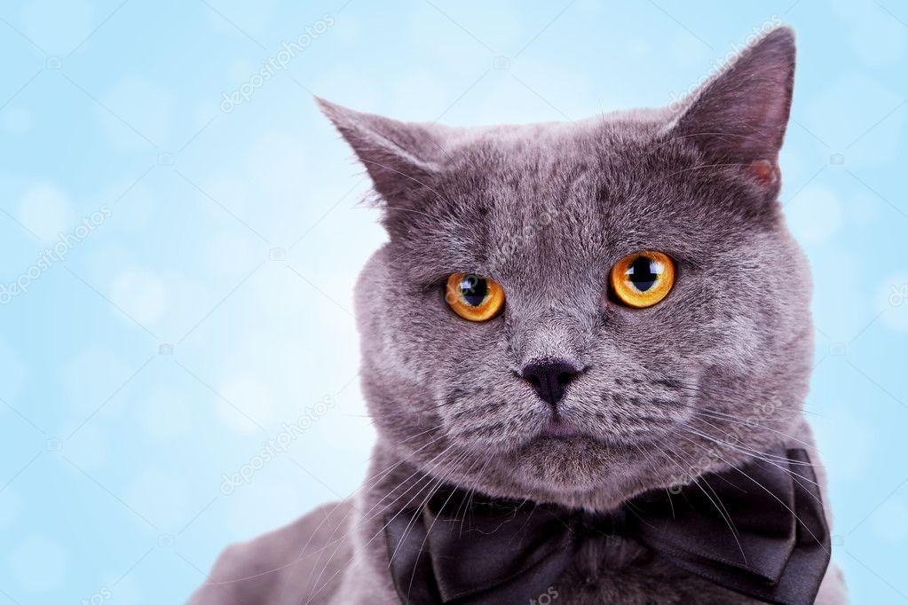 Fet svart fitta katt bar