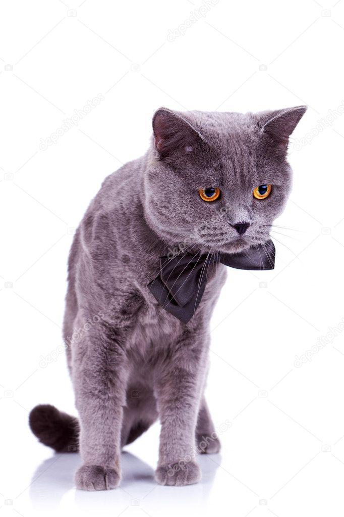 velké bílé kočičí rty