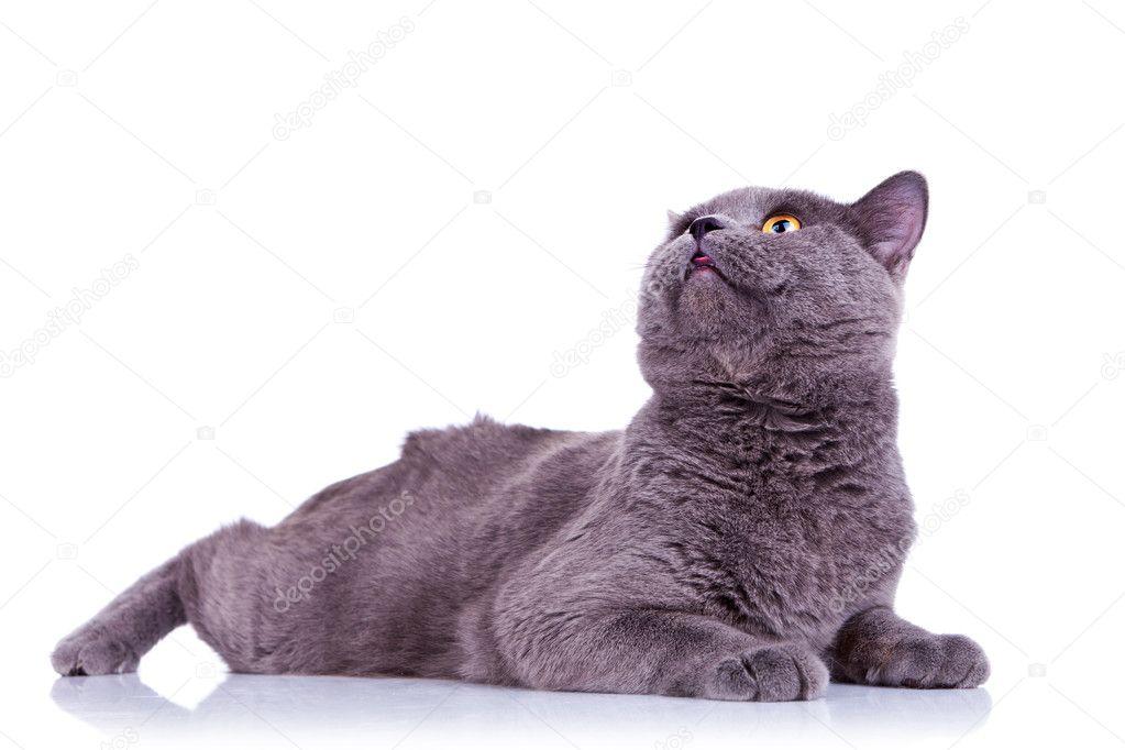 Μαύρο λίπος μουνί γάταΑσιατικό Μασάζ πορνό ταινίες