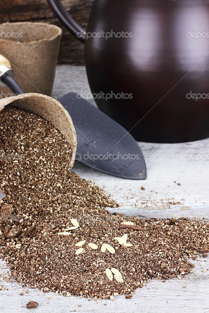 Planting Seeds in Peat Pots