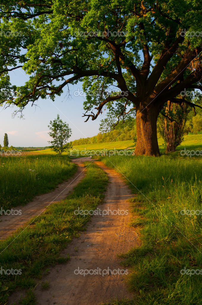 Country road on sunny spring day