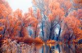 krajinomalby, ukazuje krásné oranžové lesní vedle řeky