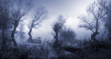 Creepy landscape showing old trees on the foggy autumn day