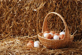 Fotografie Brown and white eggs in a basket