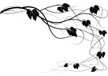 Creeper vine branches