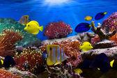 Fotografie Tropical Fish