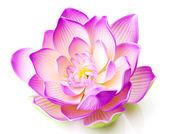 Fotografie Lotosový květ