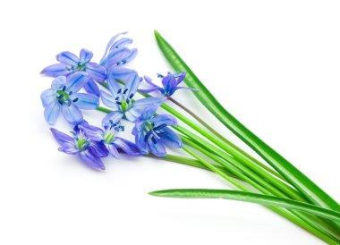 Spring flowers bluebells stock vector