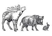 Fotografie lesní zvířata