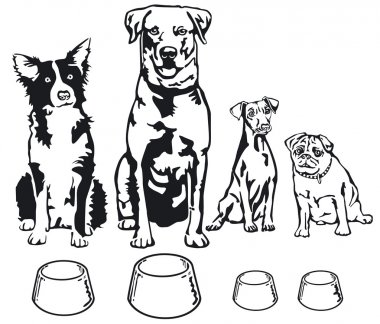 Four dogs with food bowl