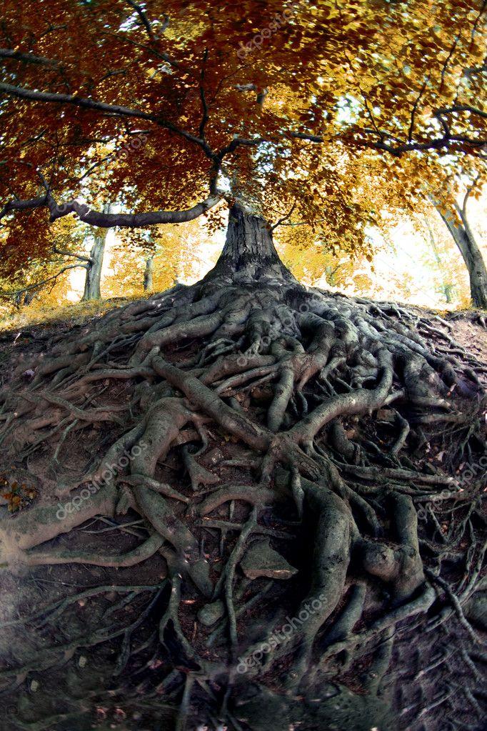 Фотообои Old tree