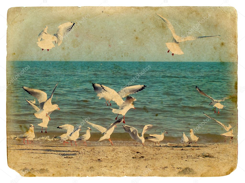 Seascape with seagulls. Old postcard.