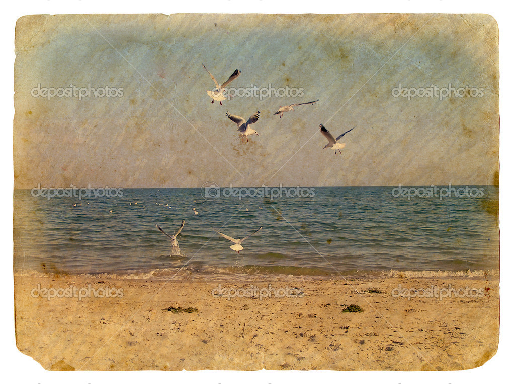 Seascape with seagulls. Old postcard