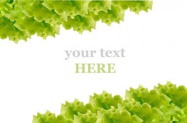 Fresh Green Salad frame
