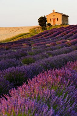 Chapel with lavender and grain fields, Plateau de Valensole, Pro