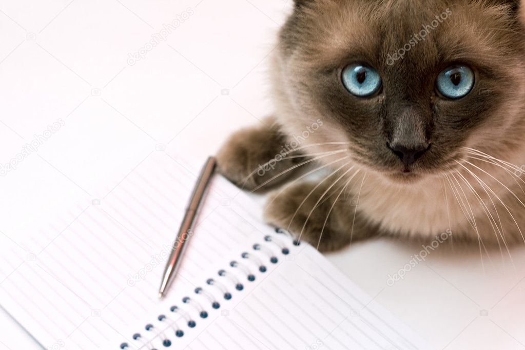 Funny cat in front of blank notebook
