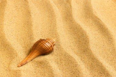 """Картина, постер, плакат, фотообои """"Морские раковины, лежа на чисто золотой песок. Макрос. Копией пространства."""", артикул 10577970"""