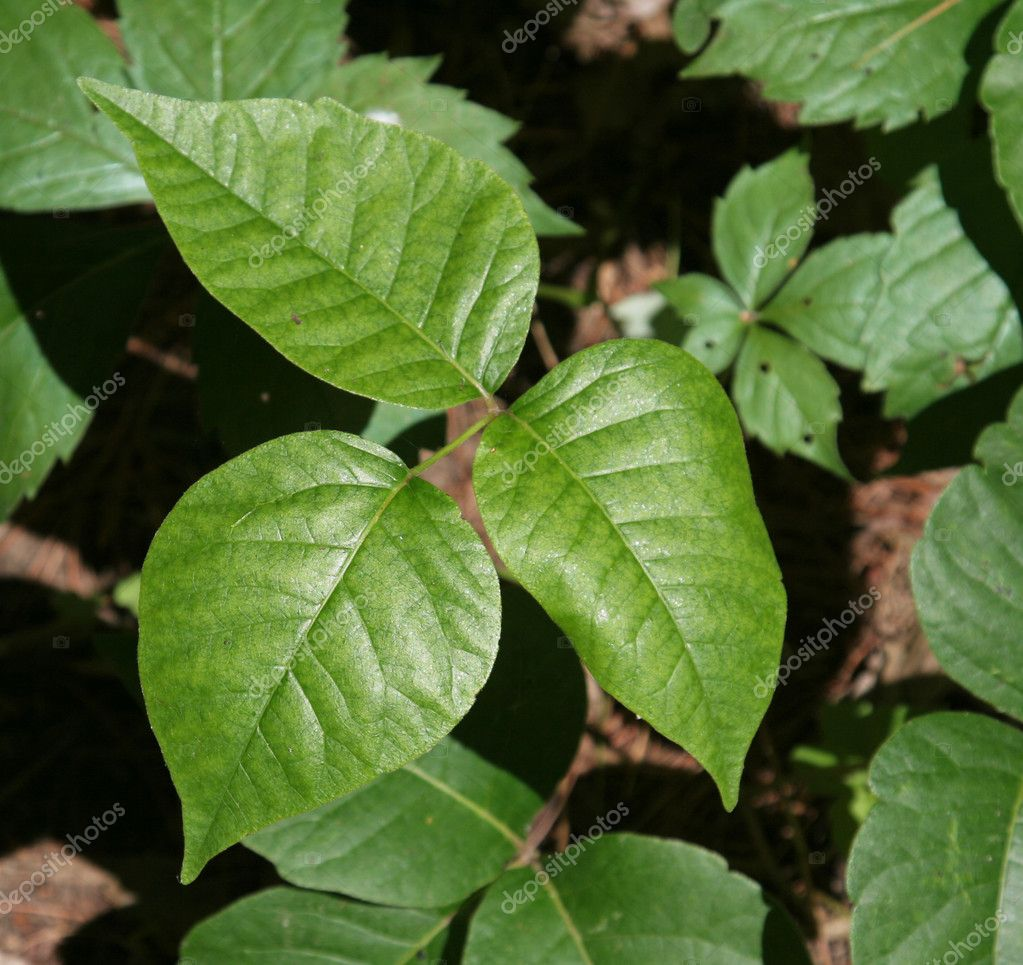 Three Leaves of Ouch