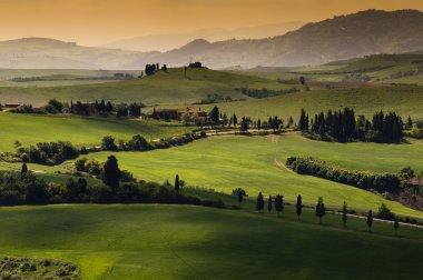 Green tuscany landscape