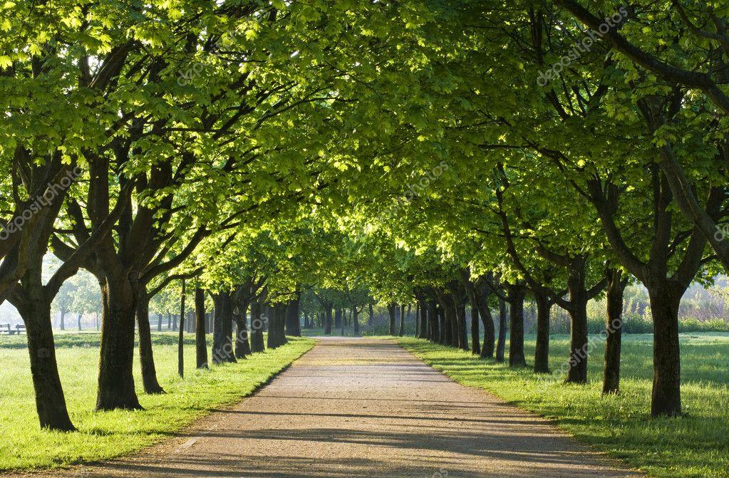 Фотообои Green trees