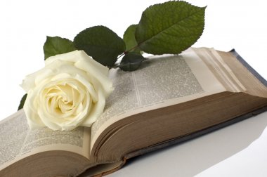 White rose on a book close up shoot stock vector