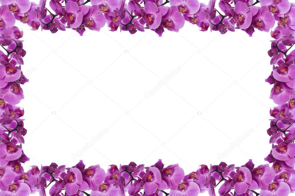 Orchid frame — Stock Photo © photodesign #9025321