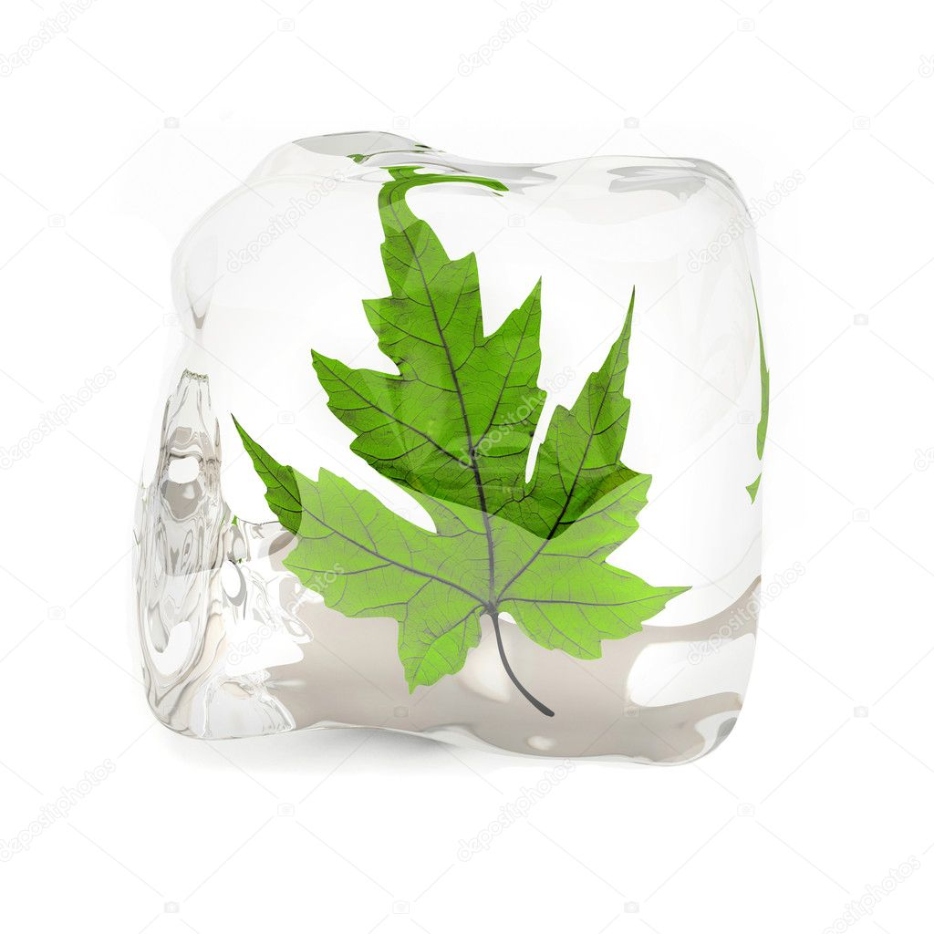 Green maple leaf in the ice cube